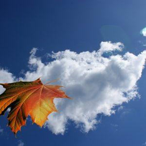 leaf-65835_640