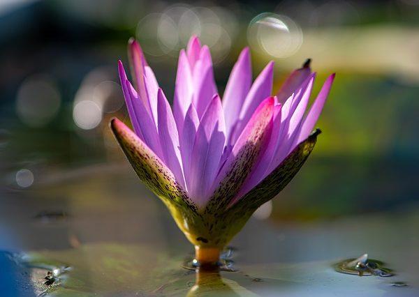 flower-4659402_640