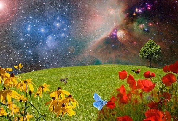 meadow-2401911_640